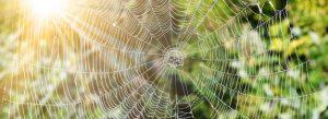 Spinnennetz mit Tautropfen auf einem schönen Hintergrund